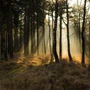 Kampina-zon-bomen